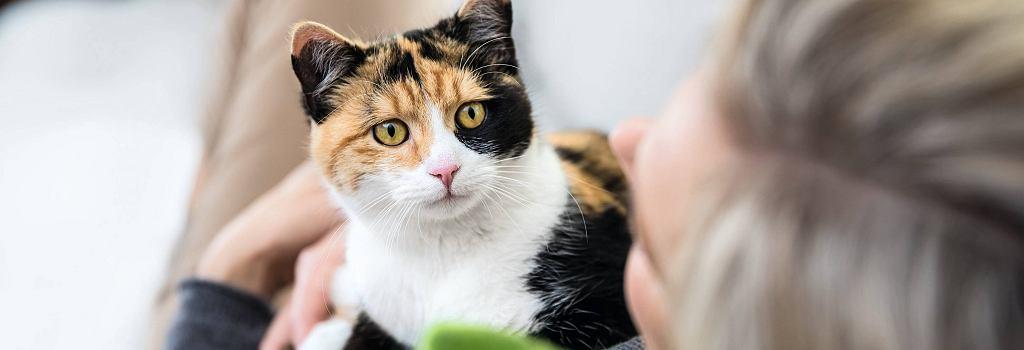 koty pochłaniają toksyczne substancje