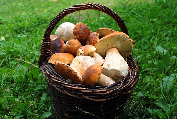 Przed włożeniem do koszyka, grzyby należy wstępnie oczyścić.