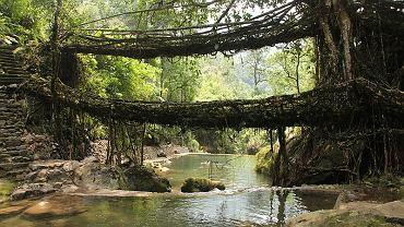 Żyjący most w Meghalaya
