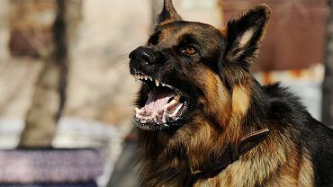Wścieklizna jest bardzo niebezpieczną, wirusową chorobą zakaźną zwierząt, która może przenieść się także na człowieka