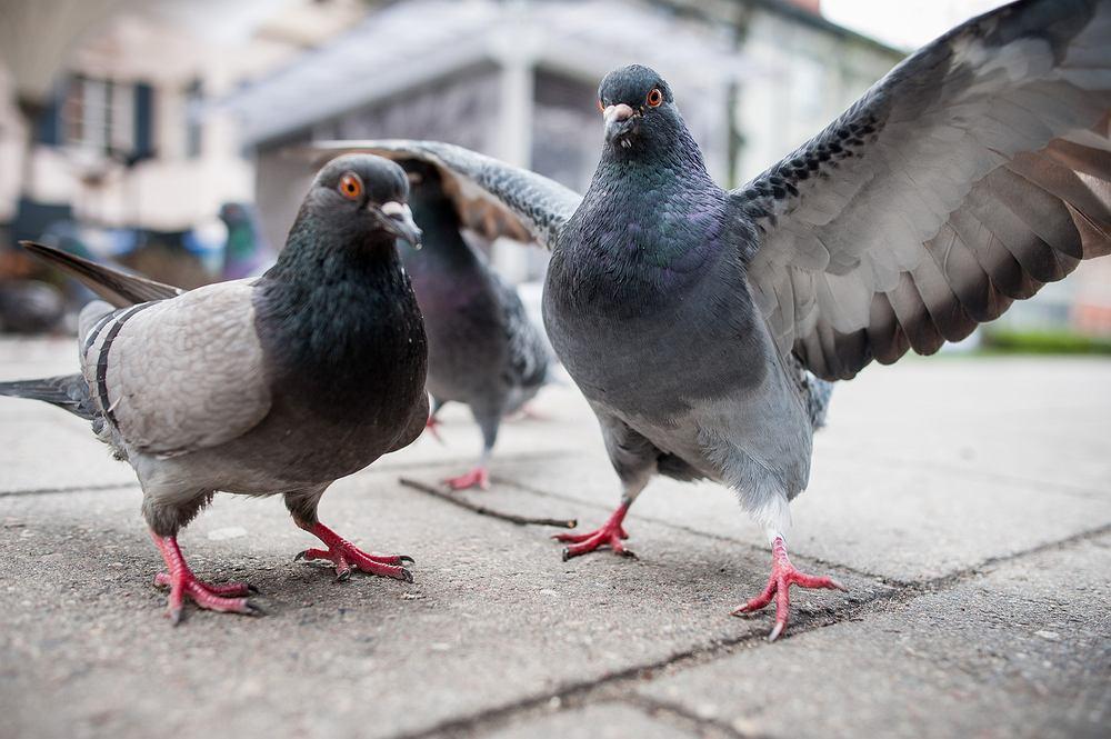 Czym karmić kaczki, wiewiórki i inne zwierzęta w parku? Zdjęcie ilustracyjne