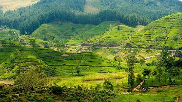 Sri Lanka / fot. Shutterstock