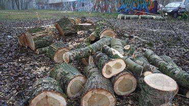 Wycinka drzew na zabytkowych błoniach Elekcyjnych
