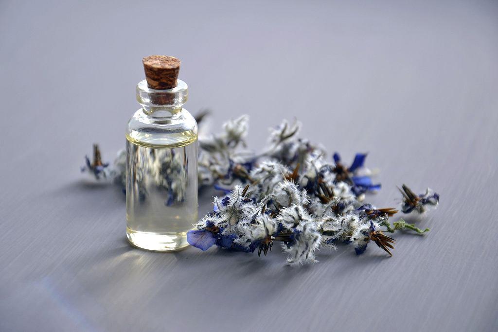 olejki i rośliny odstraszające komary (zdjęcie ilustracyjne)