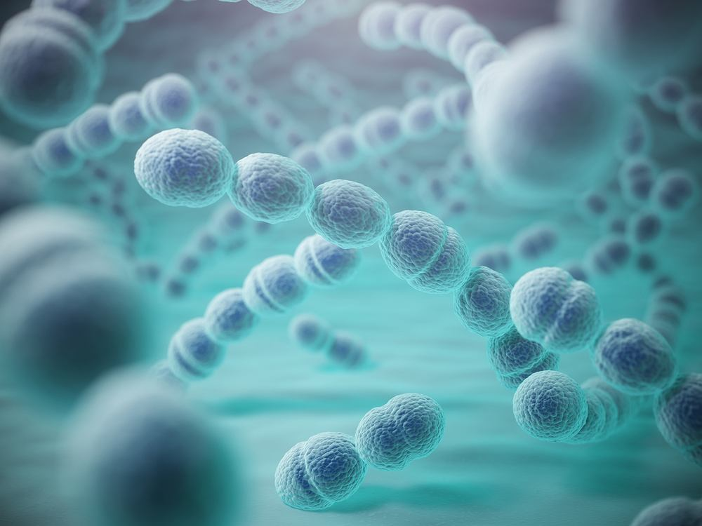 Bakterią, która powoduje ponad 2/3 pozaszpitalnych zapaleń płuc, jest dwoinka zapalenia płuc (Streptococcus pneumoniae)
