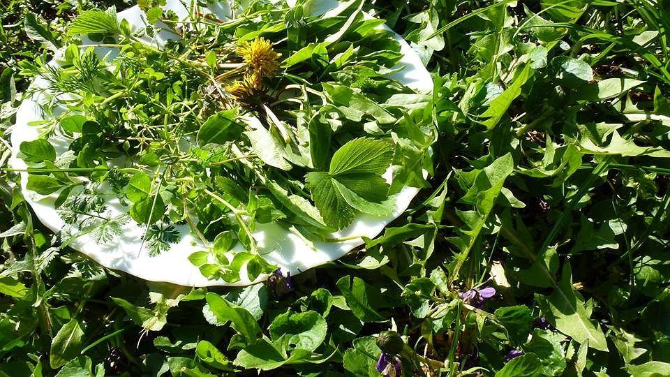 Na 1m2 trawnika jadalne liście i kwiaty mniszka, fiołka wonnego, gwiazdnicy, poziomki, koniczyny, szczawiu
