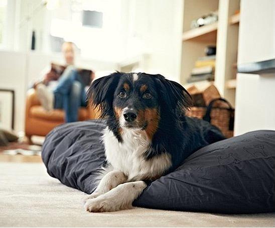 Poduszka dla psa
