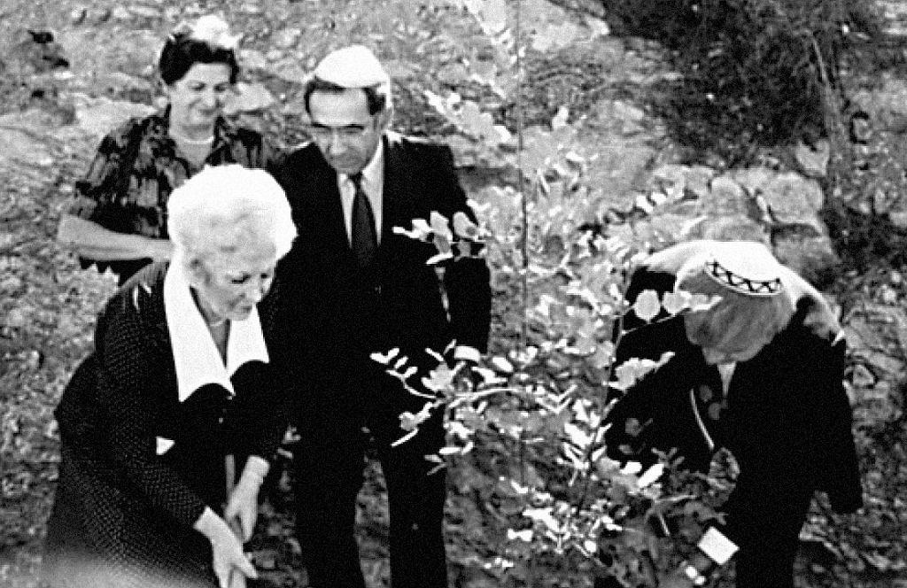 Irena Gut sadzi drzewko oliwne w alei Sprawiedliwych wśród Narodów Świata Yad Vashem, Jerozolima, 1982 r.