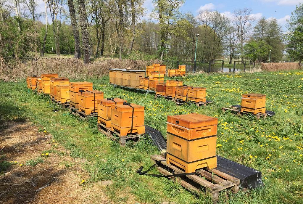Prawie dwa miliony martwych pszczół. Sprawę wyjaśnia policja (KPP w Żyrardowie )
