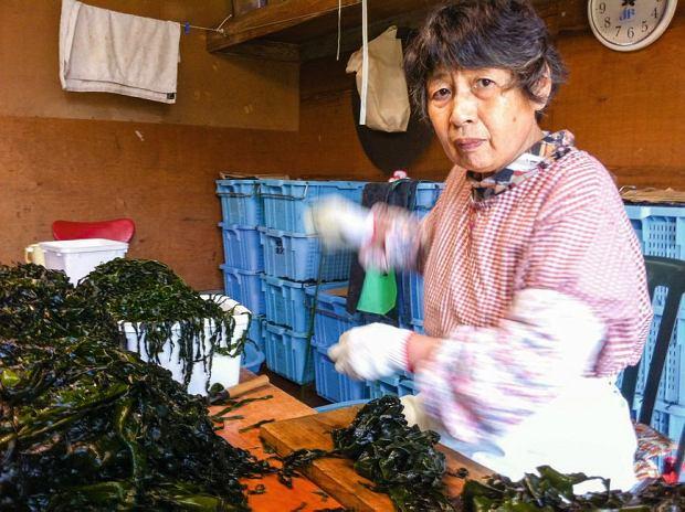 Zaprzyjaźnione starsze kobiety pomagają oddzielić plechy wodorostów od rdzenia.  Plechy to wakame