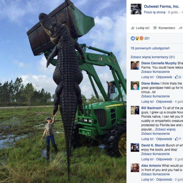 Ogromny aligator