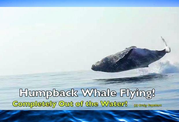 Jak duże są penisy wielorybów