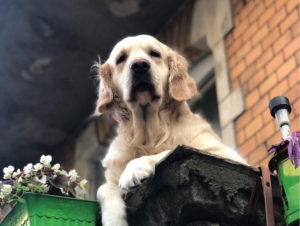 'Słodki pies na balkonie' widniał na Google Maps jako atrakcja turystyczna