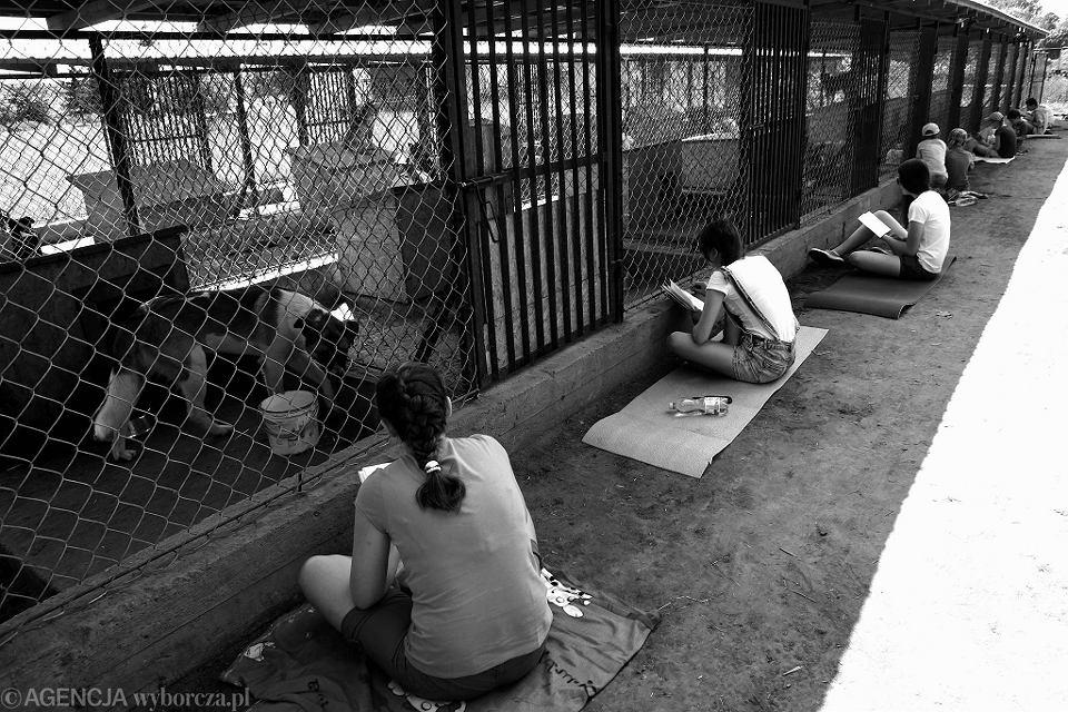 Dzieci czytają psom w schronisku w Małej Wsi