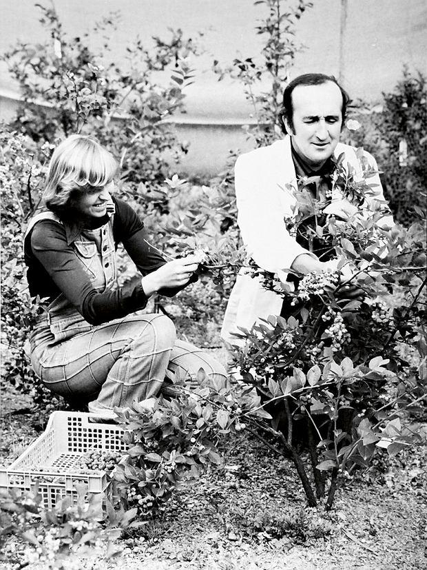 Hanna Karwowska oraz Kazimierz Pliszka -zbiór owoców na plantacji doświadczalnej wSGGW, rok 1973
