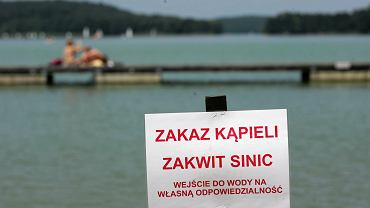 Sinice w wodzie na plaży miejskiej w Olsztynie