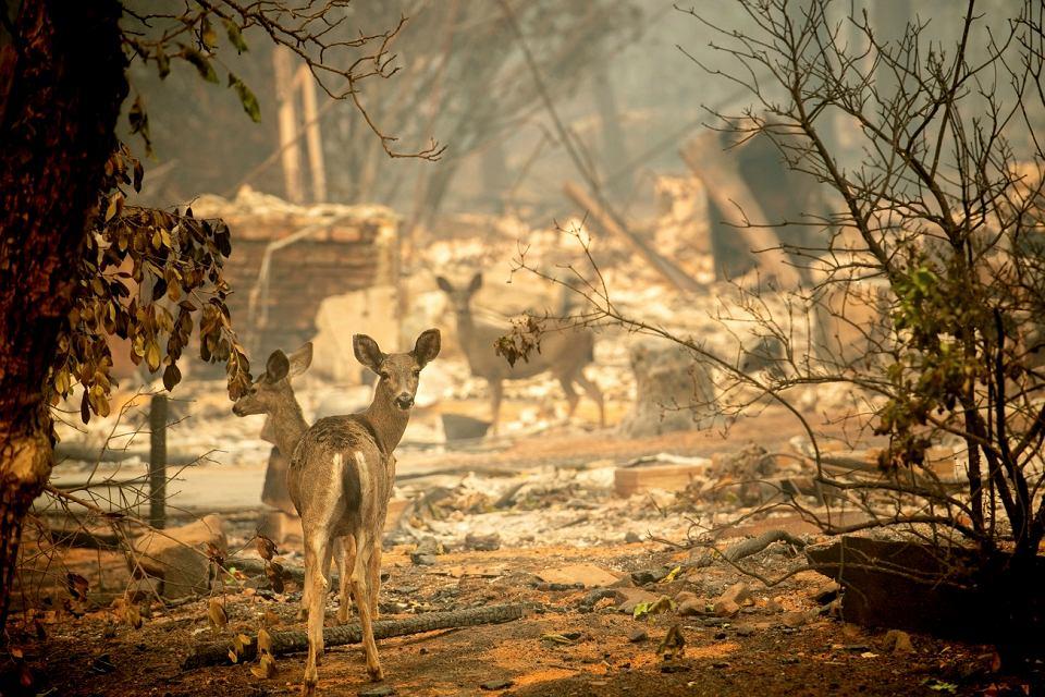 Naukowcy przestrzegali, że Kalifornii grozi katastrofalna susza, już 30 lat temu