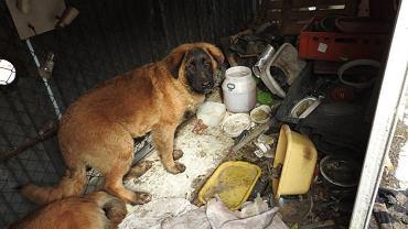 Zwłoki psa znalezione w barze chińskim w Wólce Kosowskiej