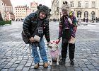 """We Wrocławiu dla WOŚP kwestują nawet goldeny. """"Luna ma swój patent"""""""