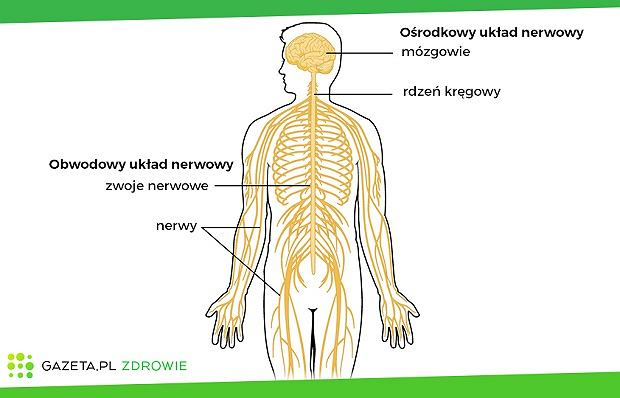 Neuropatia układu płciowego