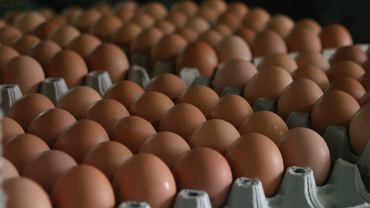 Rośnie popyt na jajka przed świętami Wielkanocnymi. Producenci przestrzegają przed zakupami na ostatnią chwilę