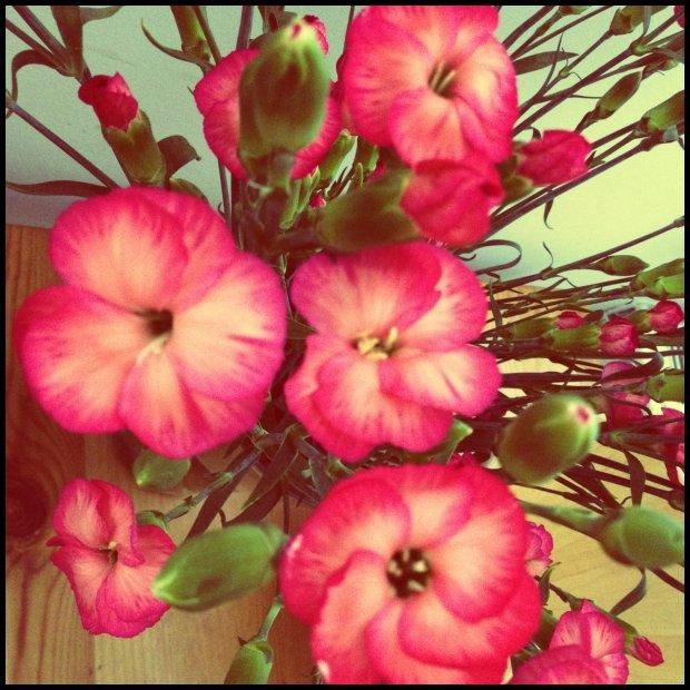 Kwiatuszki zawsze