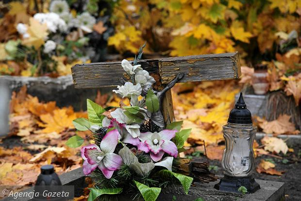 Zdjęcie numer 16 w galerii - Wszystkich Świętych we Wrocławiu. Cmentarze w kwiatach [ZDJĘCIA]