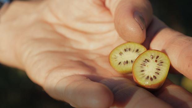 Zwykli niezwykli - polskie kiwi