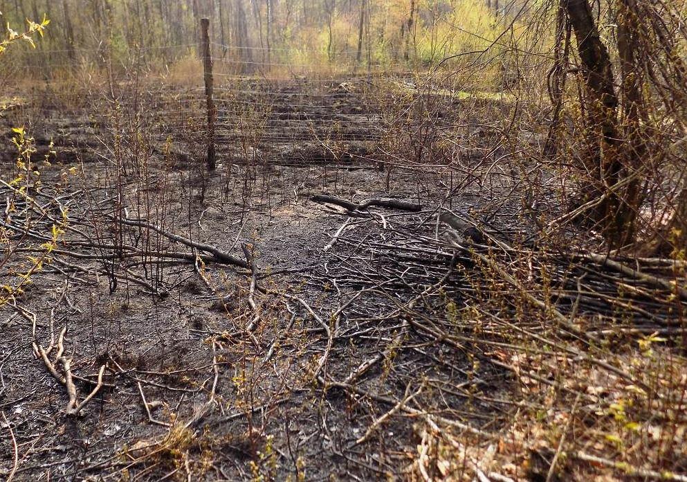 Bawili się zapalniczką, spalili las