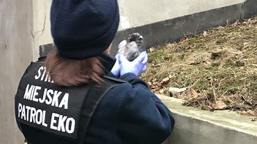 Gołąb sprawcą wypadku z udziałem radiowozu