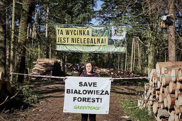 Protest aktywistów Greenpeace Polska w Puszczy Białowieskiej