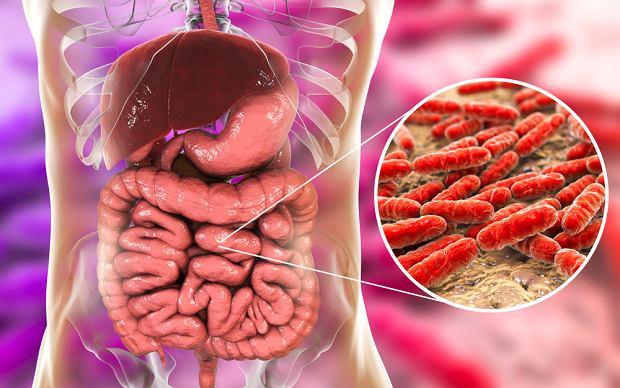 Flora bakteryjna jelit: dlaczego jest ważna dla zdrowia? Jak o nią dbać?