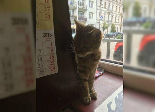 'Amstaff morderca' zaatakował kotkę Coco