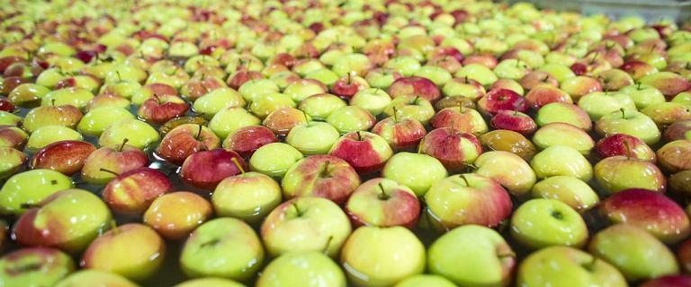 Białoruś. 5 lat więzienia za reeksport polskich jabłek do Rosji