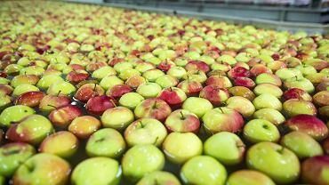 Sortownia jabłek