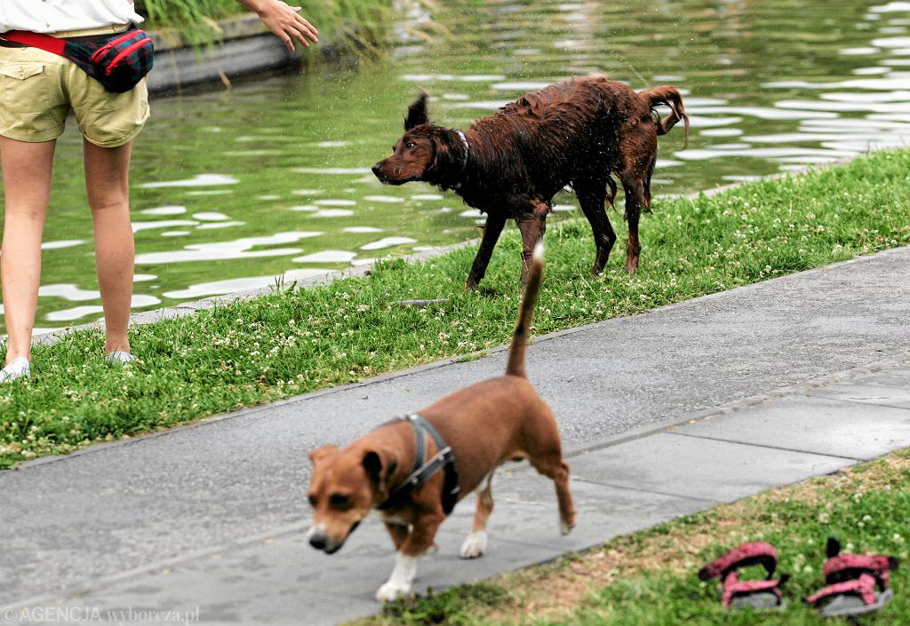 Spacer z psem (zdjęcie ilustracyjne)