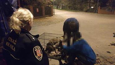 Psy zabezpieczone przez Strażników Miejskich w Inowrocławiu.