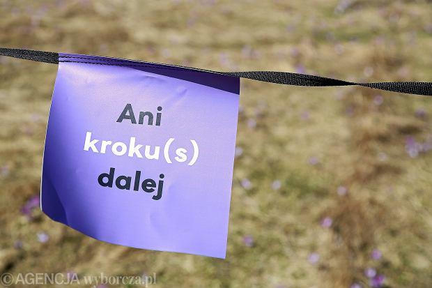 Akcja 'Hokus Krokus' prowadzona przez Gminę Kościelisko oraz Tatrzański Park Narodowy