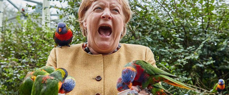 Ptasia ferajna obsiadła Angelę Merkel. Zdjęcia obiegły światowe media