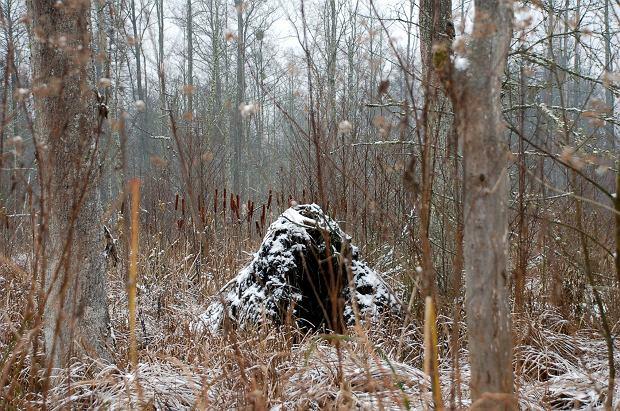 Kasia Grabka, odkąd zaczęła praktykować kąpiele leśne, za każdym razem odkrywa las na nowo (fot: NK)