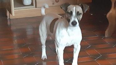 Pies dostał odszkodowanie od linii lotniczych za odwołany lot. Jack otrzyma równowartość 1000 zł