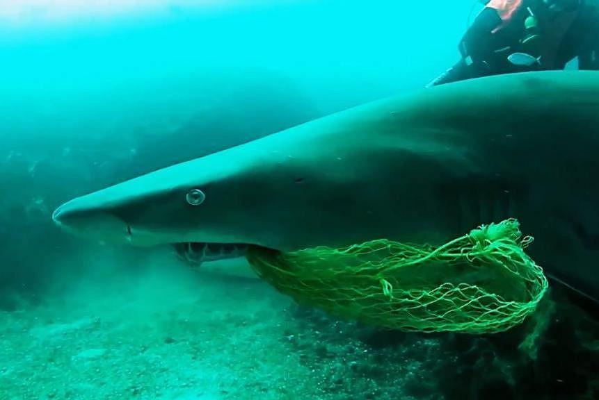 Inaki Aizpun uratował rekina