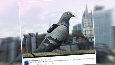 Gołębi Patrol Powietrzny w Londynie