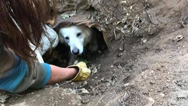 USA: Strażacy uratowali psa, który utknął w rurze. Pomogły smakołyki