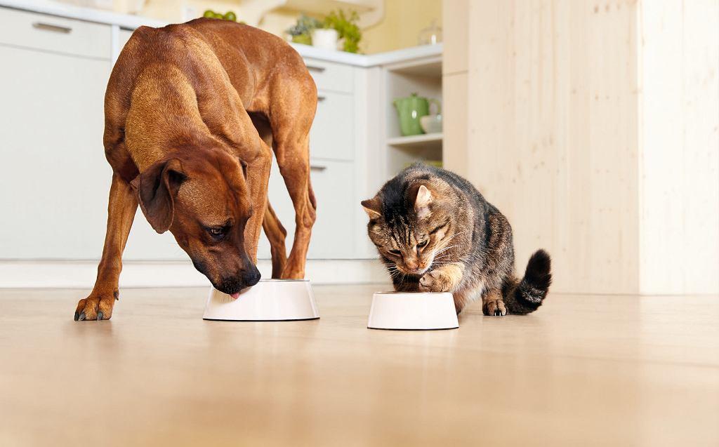 Czy dzielić się ze zwierzętami ludzkim jedzeniem ?