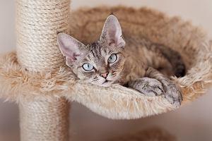 Drapak z hamakiem dla kota - jak wybrać? Te modele są naprawdę piękne