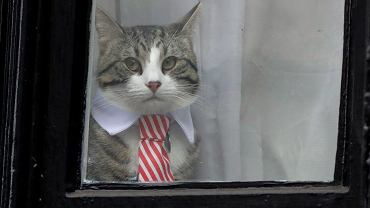 Kot z ambasady w Ekwadorze, gdzie ukrywał się Julian Assange