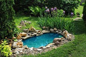 Domowe sposoby na glony w oczku wodnym