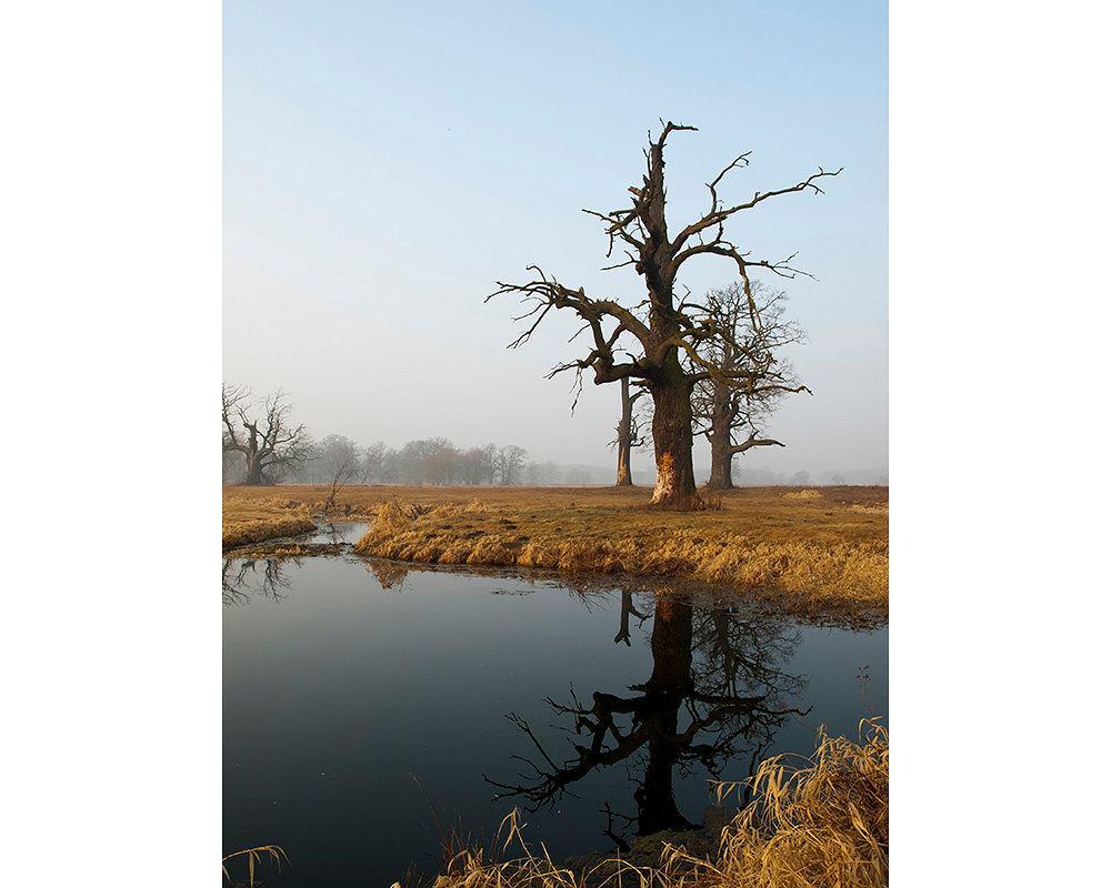 Rogaliński Park Krajobrazowy (fot. Paweł Nawrot / Wikimedia Commons / CC BY-SA 3.0)