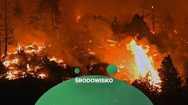 Rekordowe temperatury przyczyniają się do pożarów
